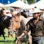 Expozebu recebe Exposição Morfológica do cavalo crioulo