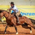Como diferenciar o cavalo crioulo de outras raças?