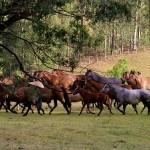 Curso para fomentar a raça Crioula em Goiás