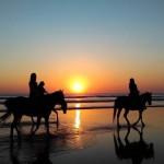 7 dicas para cuidar dos cavalos no verão