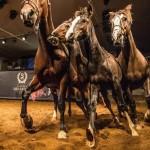 Conheça a história e a tradição do cavalo crioulo