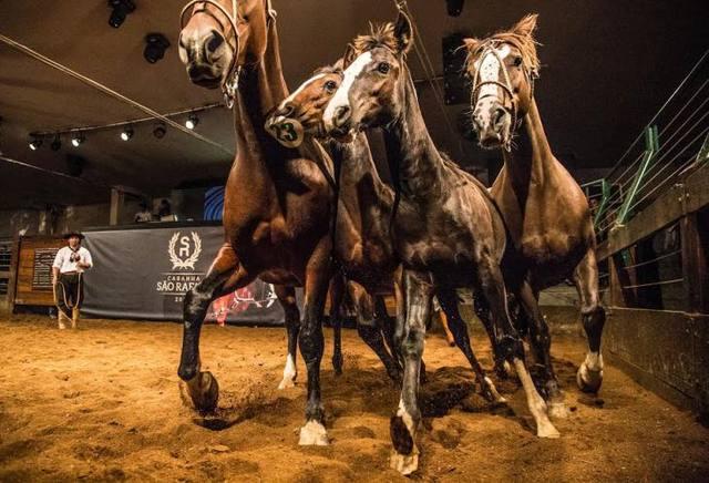 historia do cavalo crioulo cao ferreira divulação