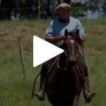 Veterinário explica os cuidados com os cavalos competidores do Freio de Ouro