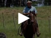 Cuidados cavalos