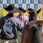 Londrina evidencia a raça crioula e seleciona animais para a Morfologia