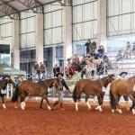 Expolondrina apresenta potencial do cavalo Crioulo no Paraná
