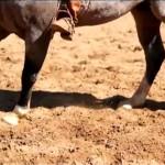 Vídeo: aprenda como ensinar seu cavalo a girar corretamente
