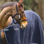Os cuidados necessários para transportar cavalos em viagens
