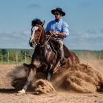 Conhece um cavalo crioulo de longe? Descubra as características da raça