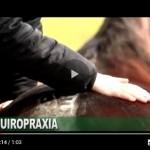 Como a quiropraxia pode ajudar seu cavalo