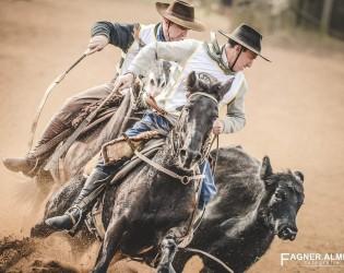 Melhoramento genético eleva versatilidade do cavalo crioulo