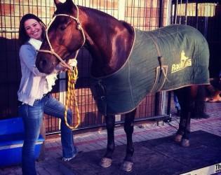 Veterinária revela as principais técnicas de fisioterapia para cavalos atletas