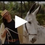 Confira os destaques do Programa Cavalos Crioulos