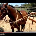 Seu cavalo tem cócegas?