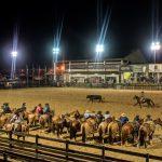 Feriado movimenta mais de 1,5 mil inscritos em competições da raça Crioula