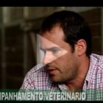 Acompanhamento veterinário é necessário para garantir bem-estar animal