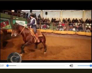 Programa Cavalos Crioulos retrata a emoção da raça