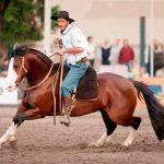 Morre cavalo Pampa de São Pedro