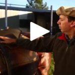 Escola Freio de Ouro de Montaria: conheça as dicas de arreamento do cavalo