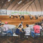 Cavalo Crioulo tem crescimento de 4,93% em São Paulo