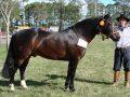 Morre cavalo crioulo Equador de Santa Edwiges