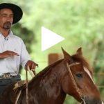 Escola Freio de Ouro de Montaria: saiba como fazer o cavalo girar com rapidez