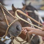 ABCCC promove primeira Exposição de Cavalos Castrados