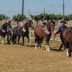 Mato Grosso atinge crescimento de 8,8% no Cavalo Crioulo