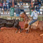 Classificatória de Brasília: veja quais são os 20 cavalos que seguem na disputa