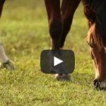 Importância da fibra para o desempenho dos cavalos