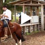 Escola Freio de Ouro de Montaria: Aprenda a acalmar o cavalo em situações estressantes