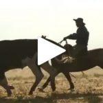 Escola Freio de Ouro de Montaria: Como preparar o cavalo para lidar com o boi