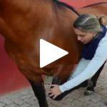 Escola Freio de Ouro de Montaria: Saiba como alongar o cavalo