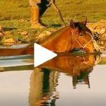 Escola Freio de Ouro de Montaria: Como trabalhar a musculatura do cavalo