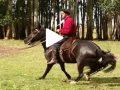 Escola Freio de Ouro de Montaria: Prepare o cavalo para um dia de prova