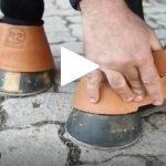 Escola Freio de Ouro de Montaria: Como proteger o cavalo contra lesões