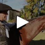 Escola Freio de Ouro de Montaria: A importância da morfologia do cavalo