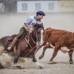 Goiás alcança crescimento de 12,49% no Cavalo Crioulo