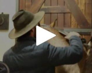 Programa Cavalos Crioulos conheça as novidades da raça