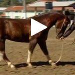 Escola Freio de Ouro de Montaria: Como fazer o cavalo recuar