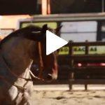Escola Freio de Ouro de Montaria: conheça a receita dos cavalos campeões