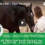 "Aprenda a falar a ""língua"" dos cavalos"