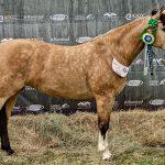 Expansão do Cavalo Crioulo é firmada em Passaporte de Londrina