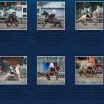 Veja as fotos dos 8 conjuntos classificados no Uruguai para a final do Freio de Ouro