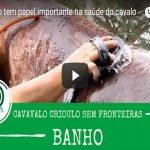 Banho tem papel importante na saúde do cavalo