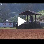 Classificatória de Ponta Grossa – 6º Lugar Fêmeas – Zilda dos Castanheiros