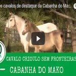Veja os cavalos de destaque da Cabanha do Mako