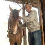 Assista na íntegra o Programa Cavalo Crioulo Sem Fronteiras do último sábado