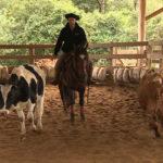 Escola Freio de Ouro de Montaria: Como treinar o cavalo para a prova de aparte
