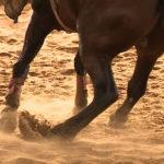 Aprenda a fazer o seu cavalo girar cada vez mais rápido